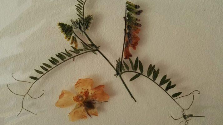 MINIMUKItastischer Kreativblog – Blüten pressen